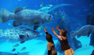 10 фантастических аквариумов в Соединенных Штатах